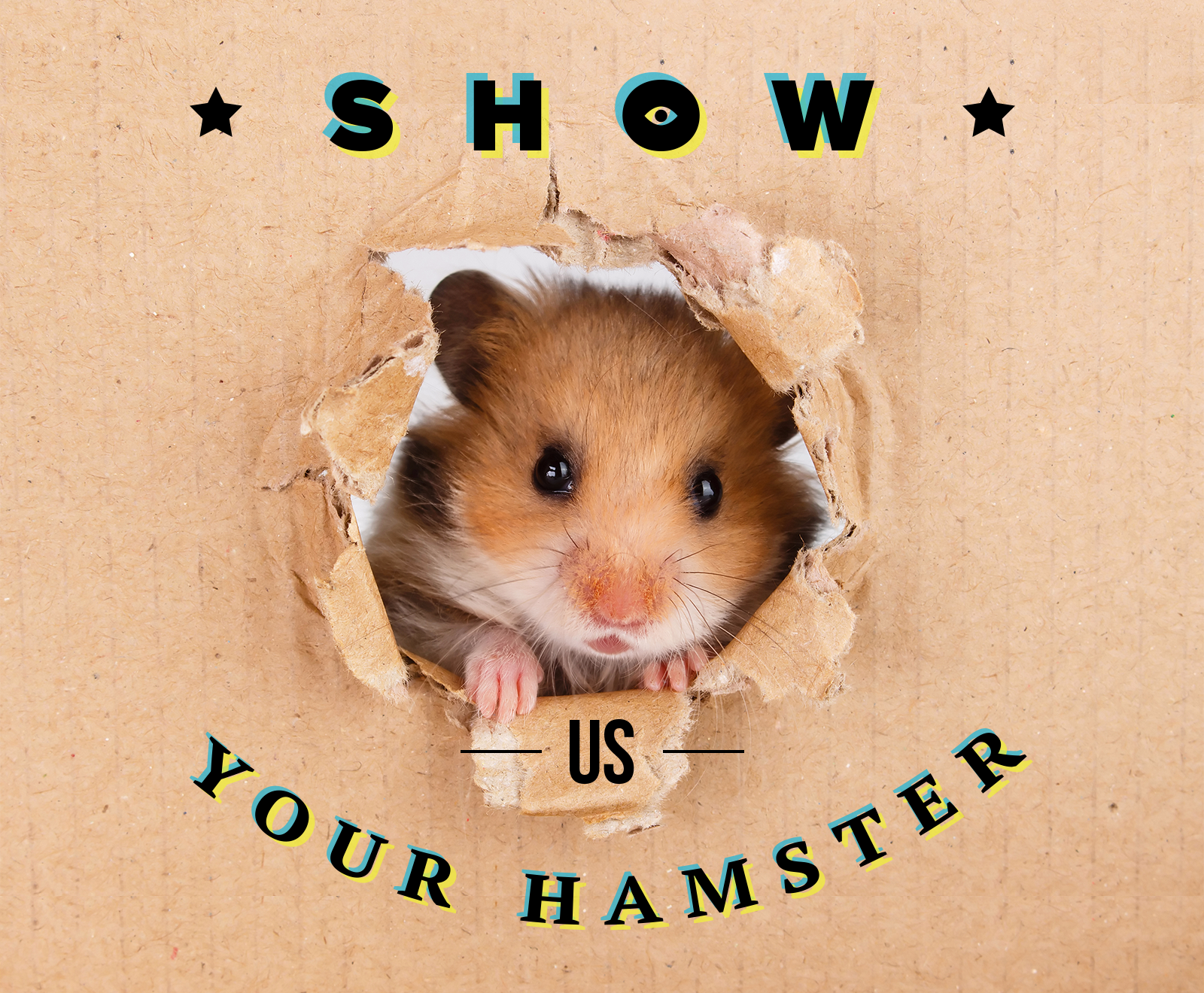 1000USD For Your Hamster`s Photo!